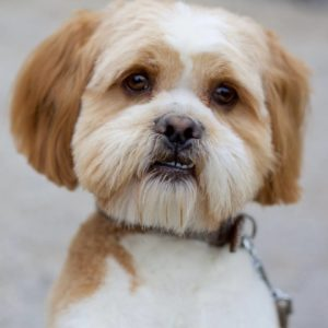 Dog Friendly Whitby